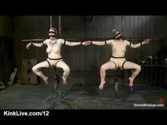 A duo kittens belted to floating chairs made of metal bars with nylons over their heads and additionally taped eyes and additionally mouths get their